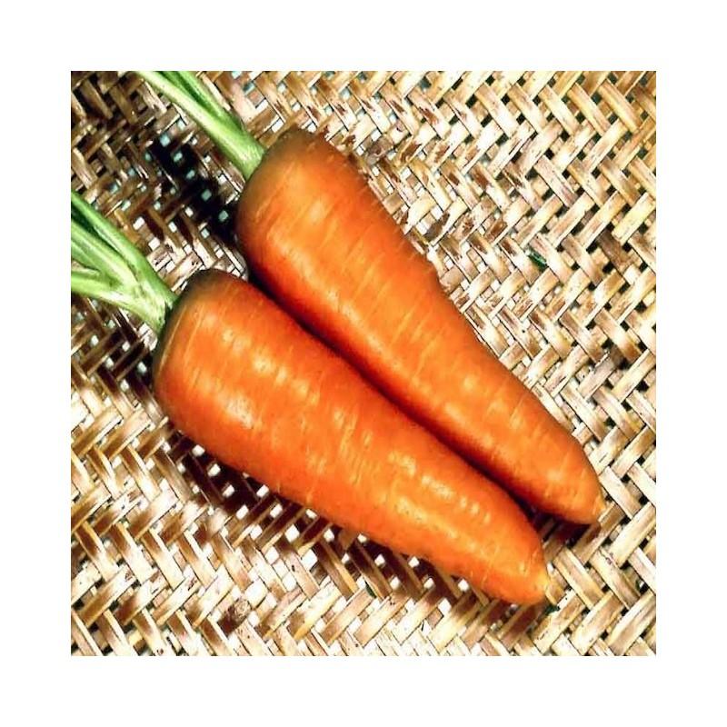 Red Sky Carrot