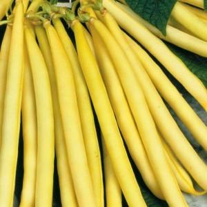 Bean Yellow Wax (Bush) - stringless edible