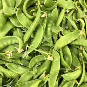 Snow Pea (Stringless Edible Snap Pea)