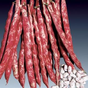 Bean Shelling (Pole)