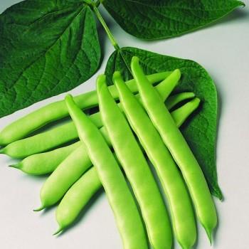Bean Marconi A Grano Bianco (Pole) - flat broad, stringless edible, white seed